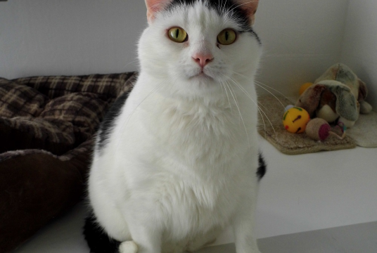 Sponsor Toby's Weight Loss by The Cat and Rabbit Rescue Centre cover photo