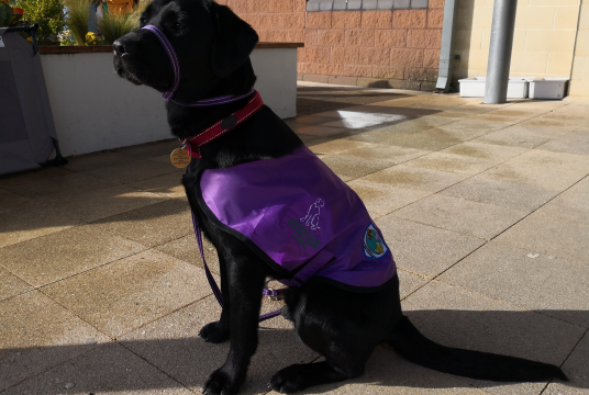 Controlled Schools' Support Council by Assistance Dogs Northern Ireland cover photo