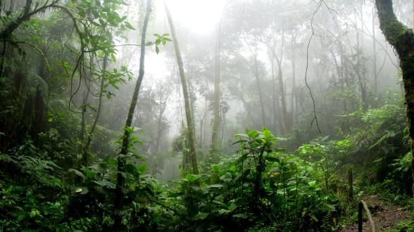 The Amazon Fire Emergency Appeal
