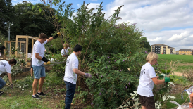 Trees for Cities with the Tax Team