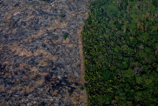 The Amazon Fire Emergency Appeal by KindLink Foundation UK cover photo