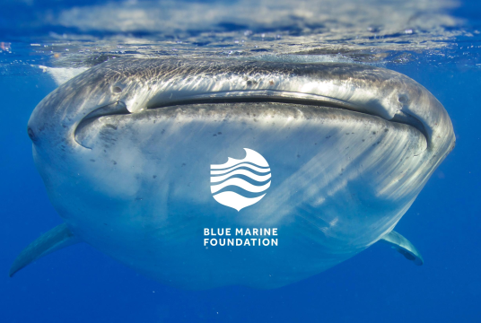 Blue Marine Foundation by Walk The Talk cover photo