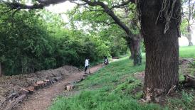 Team Volunteering Day - Goodmayes Park - 20 August