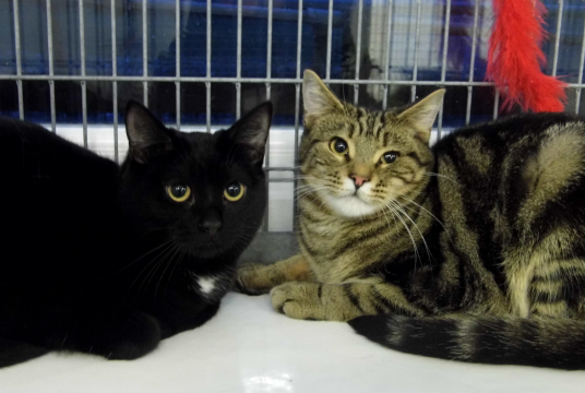 Medicine for Special Squeak by The Cat and Rabbit Rescue Centre cover photo