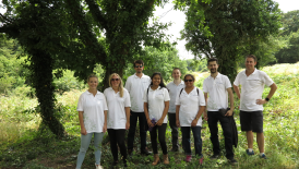 Team Volunteering Day at Grove Farm